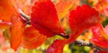 autumn colours inYukon