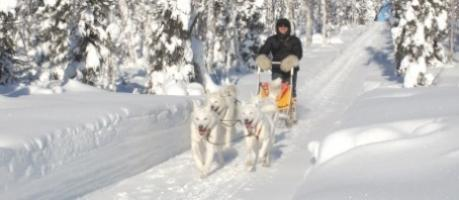dog sledding in Yukon