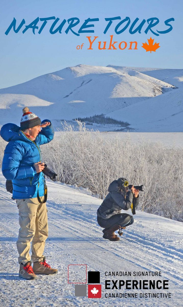 Nature Tours of Yukon's Arctic Circle Tour is a Canadian Signature Experience