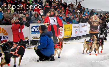 Yukon Quest 2013 - Casavant was sponsored by Nature Tours of Yukon