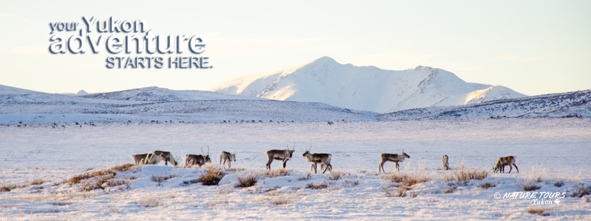 nature tours of yukon | Arctic Discovery Tour