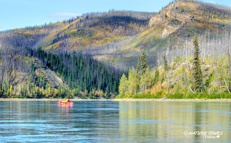 contact nature tours of yukon