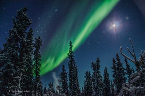 Hunter Day Yukon >> Christmas Aurora Package | Nature Tours of Yukon