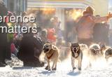 Yukon Quest in Dawson City - Nature Tours of Yukon