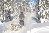 Hundeschlitten im Yukon