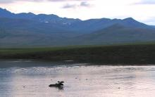 two moose lake-Yukon