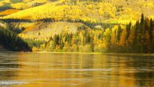 Teslin River - September colours