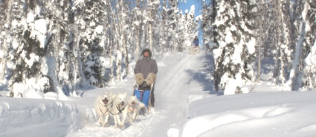 dog sledding in Yukon: